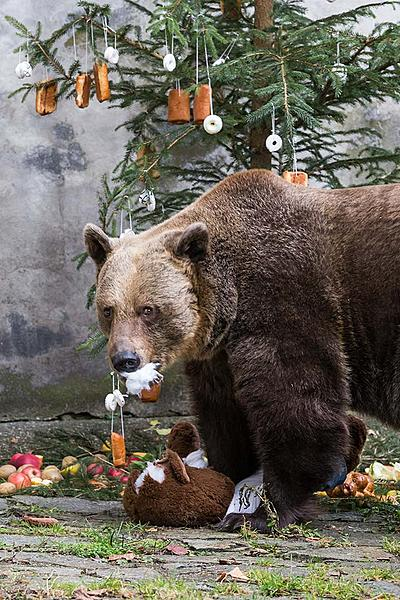 Christmas for the Bears, 24.12.2017, Advent and Christmas in Český Krumlov
